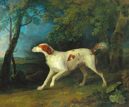 名画絵画のプリント作品販売 ソウリー・ギルピン Sawrey GilpinのA Brown and White Setter in a Wooded Landscape. 1773